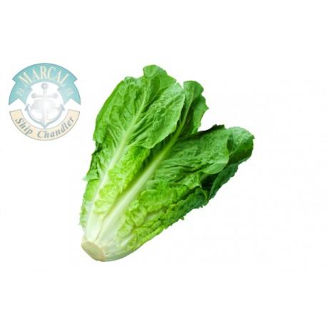Lettuce Roman