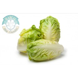 Chinase Cabbage