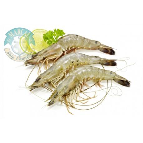 Shrimp Medium (Bulk)