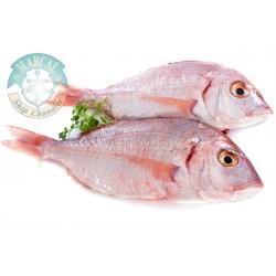 Pescado Rojo (Guachinango)