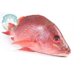 Pescado Pargo Rojo