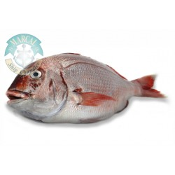 Fish for Frying Pargo
