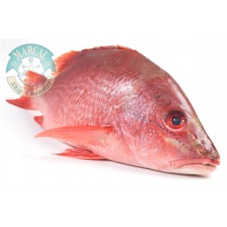Fish Red Snapper