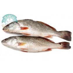 Fish for Zarandear