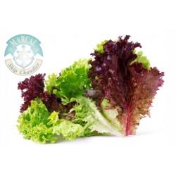 Lettuce Sangria